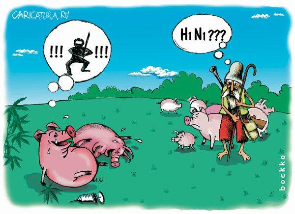 В интернете шутят на тему свинячего гриппа.