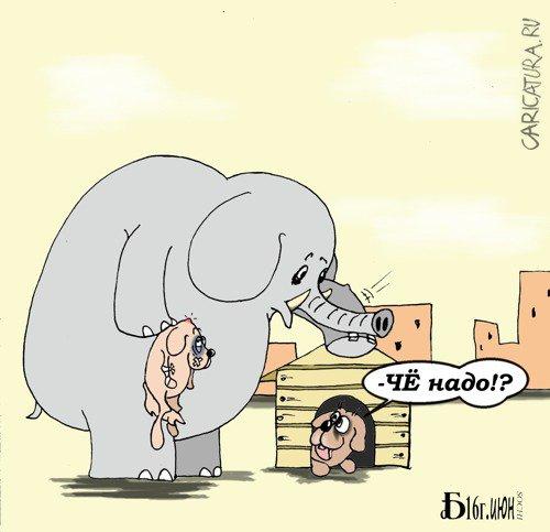 Слон и моська прикольные картинки, открытки днем