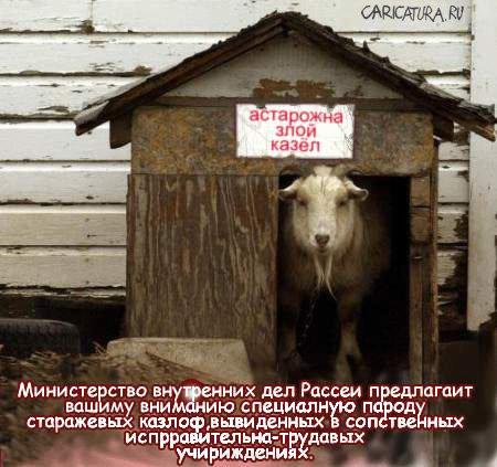 козёл фото приколы